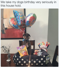 My Dogs Birthday: We take my dogs birthday very seriously in  this house hold.  0