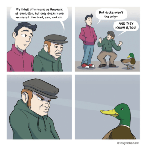 Ducks, Evolution, and Air: We thinK of humans as the peak  of evolution, but only ducks have  mastered the land, sea, and air.  But ducks aren't  the only-  AND THEY  KNOW IT, Too!  @inkyrickshaw Ducks [OC]