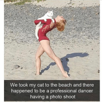 Af, Funny, and Beach: We took my cat to the beach and there  happened to be a professional dancer  having a photo shoot @x__antisocial_butterfly__x is funny af