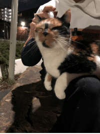 Cat, Random, and Park: We were chilling in the park and this cat decided it loved us