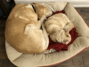 We were not sure how our senior rescue dog would take to the new cat. So far so good.: We were not sure how our senior rescue dog would take to the new cat. So far so good.