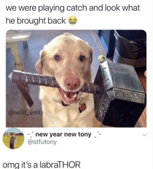 Dank, Memes, and New Year's: we were playing catch and look what  he brought back  @willLent  new year new tony-  @stfutony  omg it's a labraTHOR Beats a stick. by lloydyhats MORE MEMES