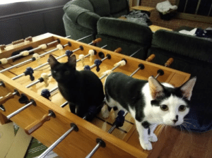 Crime, Yoshi, and Foosball: We were playing foosball and Yoshi and his partner in crime Binx came to check out the action