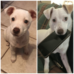 Crying, Pup, and Ant: We weren't sure what to do with him when we found him crying in an ant pile, he's grown up to be the goofiest pup ever.