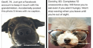 We will never not love these doggo personality bios!#dogs #funnydogs #dogbios #cutedogs #dogsoninstagram: We will never not love these doggo personality bios!#dogs #funnydogs #dogbios #cutedogs #dogsoninstagram