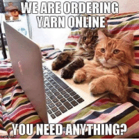 Memes, Apollo, and Yarn: WEAREORDERING  YARN  ONLINE  RYOU NEED ANYTHING wonder if they're Prime members... ;) #TeamCatMojo  adorable photo from Artemis and Apollo!  Thanks for letting us know Artemis & Apollo - we post photo credit whenever it's available
