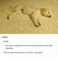 Why is there a bump in the carpet... do they ever clean?? Follow me ( @god.of.appleysauce )for more funny tumblr and textpost: weather:  shuckl:  your dog is melting and you just stand taking pictures absolutely  disgusting  Why do people take pictures of their floor I dont get it Why is there a bump in the carpet... do they ever clean?? Follow me ( @god.of.appleysauce )for more funny tumblr and textpost