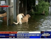 "Dank, Meme, and Pussy: WEATIER ALERTWEATHER  FLASH FLOODING  FOX4 DENTON DR&W.NORTHWEST HWY  639 e NORTHWEST DALLAS  STORMS <p>""ima drown in this pussy before i drown in the flood"" via /r/dank_meme <a href=""http://ift.tt/2wmVtz3"">http://ift.tt/2wmVtz3</a></p>"