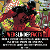 """▲▲ - Kaine! - My other IG accounts @factsofflash @yourpoketrivia @facts_of_heroes ⠀⠀⠀⠀⠀⠀⠀⠀⠀⠀⠀⠀⠀⠀⠀⠀⠀⠀⠀⠀⠀⠀⠀⠀⠀⠀⠀⠀⠀⠀⠀⠀⠀⠀⠀⠀ ⠀⠀----------------------- spiderman peterparker tomholland marvelfacts spidermanfacts webslingerfacts venom carnage avengers xmen justiceleague marvel homecoming tobeymaguire andrewgarfield ironman spiderman2099 civilwar auntmay like gwenstacy maryjane deadpool miguelohara hobgoblin milesmorales like4like: WEB  SLINGER  FACTS  Kaine is immune to Spider-Man's Spider-Sense.  Due to their sharing the same DNA,  Spider-Man's Spider-Sense recognizes Kaine  as """"self"""" ▲▲ - Kaine! - My other IG accounts @factsofflash @yourpoketrivia @facts_of_heroes ⠀⠀⠀⠀⠀⠀⠀⠀⠀⠀⠀⠀⠀⠀⠀⠀⠀⠀⠀⠀⠀⠀⠀⠀⠀⠀⠀⠀⠀⠀⠀⠀⠀⠀⠀⠀ ⠀⠀----------------------- spiderman peterparker tomholland marvelfacts spidermanfacts webslingerfacts venom carnage avengers xmen justiceleague marvel homecoming tobeymaguire andrewgarfield ironman spiderman2099 civilwar auntmay like gwenstacy maryjane deadpool miguelohara hobgoblin milesmorales like4like"""