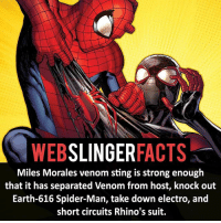 Facts, Memes, and Spider: WEB  SLINGER  FACTS  Miles Morales venom sting is strong enough  that it has separated Venom from host, knock out  Earth-616 Spider-Man, take down electro, and  short circuits Rhino's suit. ▲▲ - Miles Morales! - My other IG accounts @factsofflash @yourpoketrivia @facts_of_heroes ⠀⠀⠀⠀⠀⠀⠀⠀⠀⠀⠀⠀⠀⠀⠀⠀⠀⠀⠀⠀⠀⠀⠀⠀⠀⠀⠀⠀⠀⠀⠀⠀⠀⠀⠀⠀ ⠀⠀----------------------- spiderman peterparker tomholland marvelfacts spidermanfacts webslingerfacts venom carnage avengers xmen justiceleague marvel homecoming tobeymaguire andrewgarfield ironman spiderman2099 civilwar auntmay like gwenstacy maryjane deadpool miguelohara hobgoblin milesmorales like4like