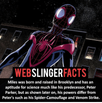 Memes, Deadpool, and Brooklyn: WEB  SLINGER  FACTS  Miles was born and raised in Brooklyn and has an  aptitude for science much like his predecessor, Peter  Parker, but as shown later on, his powers differ from  Peter's such as his Spider-Camouflage and Venom Strike. ▲▲ - Love Miles! - My other IG accounts @factsofflash @yourpoketrivia @facts_of_heroes ⠀⠀⠀⠀⠀⠀⠀⠀⠀⠀⠀⠀⠀⠀⠀⠀⠀⠀⠀⠀⠀⠀⠀⠀⠀⠀⠀⠀⠀⠀⠀⠀⠀⠀⠀⠀ ⠀⠀----------------------- spiderman peterparker tomholland marvelfacts spidermanfacts webslingerfacts venom carnage avengers xmen justiceleague marvel homecoming tobeymaguire andrewgarfield ironman spiderman2099 civilwar auntmay like gwenstacy maryjane deadpool miguelohara hobgoblin milesmorales like4like