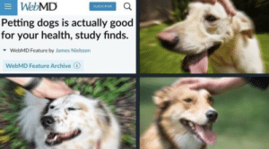 Dogs, Target, and Tumblr: WebMD  SUBSCRIBE  Petting dogs is actually good  for your health, study finds.  WebMD Feature by James Nielssern  WebMD Feature Archive queen-apathy: