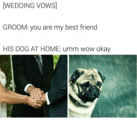 Funny, Wedding Vows, and Thats Just Wrong: WEDDING VOWS  GROOM: you are my best friend  HIS DOG AT HOME: umm wow okay  BadJokeBen That's just wrong @badjokeben 😕😩 poorpupper mansbestfriend