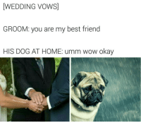 Bad Jokes, Memes, and 🤖: WEDDING VOWS  GROOM: you are my best friend  HIS DOG AT HOME: umm wow okay  Bad Joke Ben 😂😂 @badjokeben made 7 of the top 10 memes from 2016, if you aren't following, you're missing out