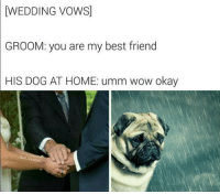 Dank, 🤖, and Wedding Vows: [WEDDING VOWS]  GROOM: you are my best friend  HIS DOG AT HOME: umm wow okay  BadJokeBen good boy deserves better