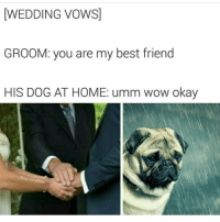 Memes, 🤖, and Wedding Vows: WEDDING VOWS  GROOM: you are my best friend  HIS DOG AT HOME: umm wow okay  Bad JokeBen