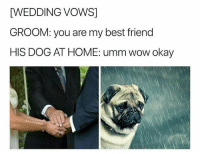 Best Friend, Funny, and Wow: WEDDING VOWS]  GROOM: you are my best friend  HIS DOG AT HOME: umm wow okay  BadJokeBe Why he do max like that 😔😭