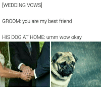 Best Friend, Wow, and Best: WEDDING VOWS]  GROOM: you are my best friend  HIS DOG AT HOME: umm wow okay  BadJokeBen