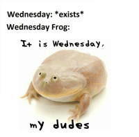 Wednesday: Wednesday: *exists*  Wednesday Frog:  I+ is Wednesday,  my dudes