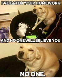 "9gag, Cute, and Dank: WEEATENYOURHOMEWORK  ANDNOONEWILL BELIEVE YOU  NOONE. In culinary school, ""my dog ate my homework"" was a legitimate excuse. https://9gag.com/gag/aqbPmRR/sc/cute?ref=fbsc"