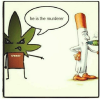 Memes, 🤖, and Stoner: WEED  he is the murderer weed weedstagram weedfun follow4follow like4follow vapelife new like4like like weedsex laugh weedporn weedass smokeweedeveryday marijuana smoke cool stoner smoker morning vapelife instaweed420 instaweed f4f nice cannabis maryjane