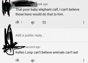 Animals, Facepalm, and Chat: week ago  That poor baby elephant calf, I can't believe  those lions would do that to him  Add a public reply...  second ago  Kellen Loop can't believe animals cant eat  4 COmMuNiSm has entered the chat