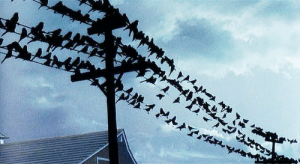 Tumblr, Birds, and Blog: wehadfacesthen:  The Birds (Alfred Hitchcock, 1963)