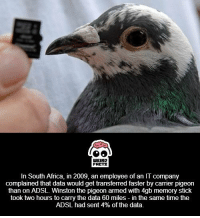 Africa, Weird, and South Africa: WEIRD  FALTS  In South Africa, in 2009, an employee of an IT company  complained that data would get transferred faster by carrier pigeon  than on ADSL. Winston the pigeon armed with 4gb memory stick  took two hours to carry the data 60 miles in the same time the  ADSL had sent 4% of the data. ((useful))