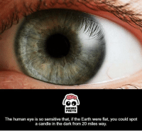 human eyes: WEIRD  FALTS  The human eye is so sensitive that, if the Earth were flat, you could spot  a candle in the dark from 20 miles way