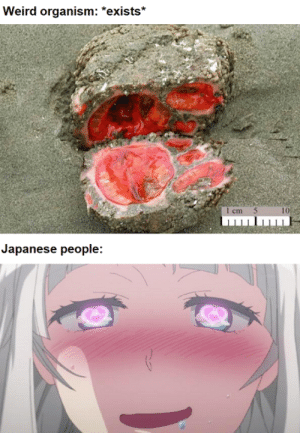 And that's a fact: Weird organism: *exists*  1 cm 5  10  Japanese people: And that's a fact