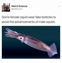 Fake, Weird, and Science: Weird Science  @weird_sci  Some female squid wear fake testicles to  avoid the advancements of male squids The Deception! 😩😩😩 SheGottaDie