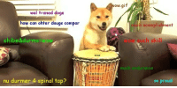 Doge has skill: wel traned doge  how can ohter dougs compar  shibed durms wow  nu durmer 4 spinal tap?  ow.gif  much acomplishment  Such skill  so proud Doge has skill