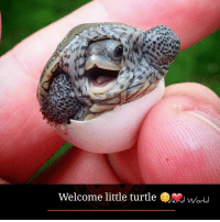 Memes, Garden State, and Little Turtle: Welcome little turtle World Photo by @garden_state_tortoise