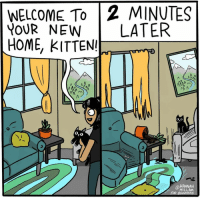 Memes, Home, and 🤖: WELCOME To 2 MINUTES  YOUR NEW LATER  HoME, KITTEN  O.o  @HANNAH  HILLAM You've certainly made yourself at home 🐱 (by @hannahhillam)