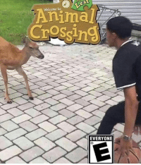 AYYY: Welcome to  Animal  Crossin  EVERYONIE AYYY