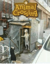 Animal Crossing: Welcome to  Animal  Crossing