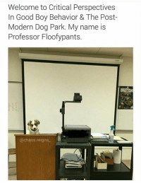 Good, Humans of Tumblr, and Boy: Welcome to Critical Perspectives  In Good Boy Behavior & The Post-  Modern Dog Park. My name is  Professor Floofypants.  @chaos.reigns