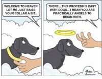Doggos are angels: WELCOME TO HEAVE.  LET ME JUST RAISE  YOUR COLLAR A BIT...  THERE... THIS PROCESS IS EASY  WITH DOGS... I MEAN YOU ARE  PRACTICALLY ANGELS TO  BEGIN WITH Doggos are angels