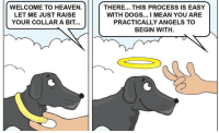 Dogs, Heaven, and Angels: WELCOME TO HEAVEN.  LET ME JUST RAISE  YOUR COLLAR A BIT...  THERE... THIS PROCESS IS EASY  WITH DOGS... I MEAN YOU ARE  PRACTICALLY ANGELS TO  BEGIN WITH. I heard he was the best