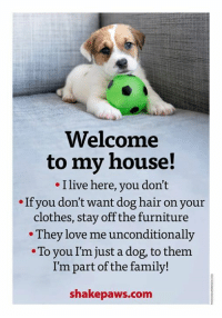 Clothes, Family, and Love: Welcome  to my house!  I live here, you don't  If you don't want dog hair on your  clothes, stay off the furniture  They love me unconditionally  To you I'm just a dog, to them  I'm part of the family!  shake paws.com