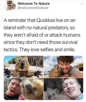 Love, Live, and Nature: Welcome To Nature  @welcometOnature  A reminder that Quokkas live on an  island with no natural predators, so  they aren't afraid of or attack humans  since they don't need those survival  tactics. They love selfies and smile. Next vacation spot