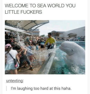 The whale has had enough of your shit: WELCOME TO SEA WORLD YOU  LITTLE FUCKERS  untexting:  I'm laughing too hard at this haha. The whale has had enough of your shit