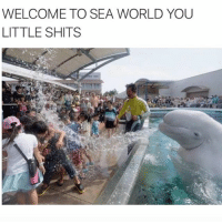 Memes, 🤖, and Gone: WELCOME TO SEA WORLD YOU  LITTLE SHITS MANATEES GONE WILD. Also, if you write in the comments that it's not a manatee like you're a fucking marine biologist, you are getting BLOCKED NERD (@benizooted)