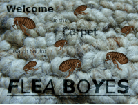 <p>Do not listen to them.</p>: Welcome  to the  atch out for  FLEA BOYES  Do not feed the  tter what they tell you <p>Do not listen to them.</p>