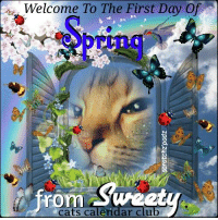 Welcome To The First Day Of  From Sweet  cats calendar club Welcome to Spring, from my cat Sweety, her fbpg is, Sweety & Cat Friends