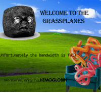 Act, Bandwidth, and Unfortunately: WELCOME TO THE  GRASSPLANES  ow gree  Unfortunately the bandwidth is fUS  act  Meanwhile enjoy the HEMOGLOB
