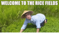 When unsuspecting people log into Imgur today, and Usersub be like: WELCOME TO THE RICE FIELDS When unsuspecting people log into Imgur today, and Usersub be like