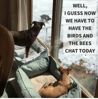 Birds, Chat, and Guess: WELL,  I GUESS NOW  WE HAVE TO  HAVE THE  BIRDS AND  THE BEES  CHAT TODAY Neighbors are super classy.
