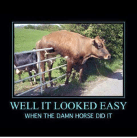 Horse Meme: WELL, IT LOOKED EASY  WHEN THE DAMN HORSE DID IT