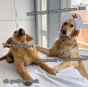 Someone get me a milkbone stat! by witchywhims MORE MEMES: well ive got sum bad news fren  what is it dogtor?  ur extremly low on snaccos  oh gosh  oh heck Someone get me a milkbone stat! by witchywhims MORE MEMES